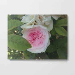 Marie Antoinette Rose Metal Print