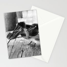 Juvenile Brown Pelican Tale 8 Stationery Cards