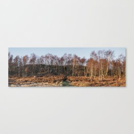 Birch trees basked in warm light at sunset. Upper Padley, Derbyshire, UK. Canvas Print