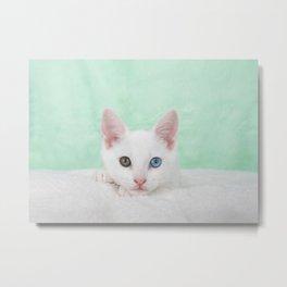 Portrait of a white kitten with heterochromia Metal Print