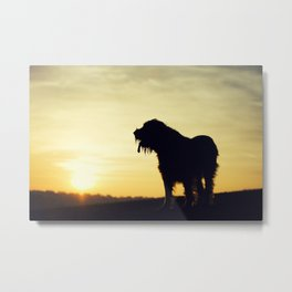 Brown Roan Italian Spinone Dog Sunset Metal Print