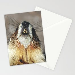 Nosy Stationery Cards