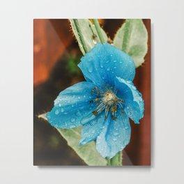 Himalayan Blue Poppy, fairbanks alaska Metal Print
