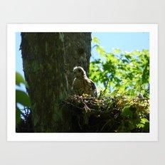 young hawk Art Print