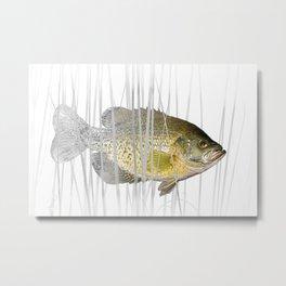 Black Crappie Fish Metal Print