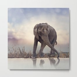 Young elephant near water at sunset Metal Print