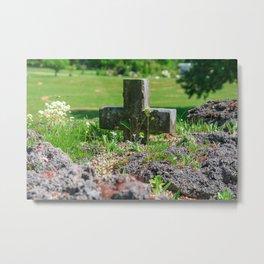 Alpine flower Metal Print