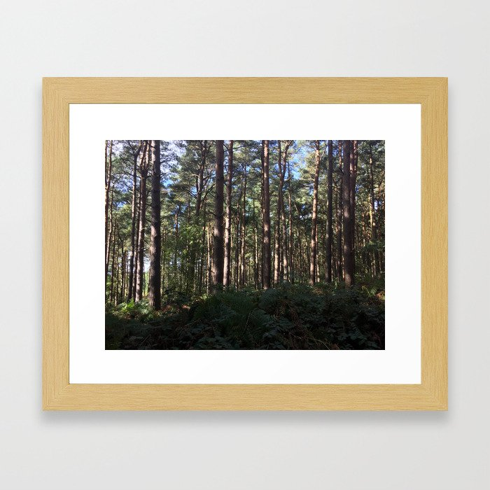 Trees Over Ferns. Rushmere Country Park, Bedfordshire UK Framed Art Print