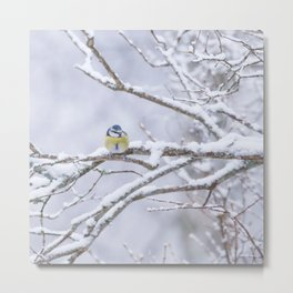 Blue Tit Bird On A Snowy Branch Winter Scene #decor #society6 #buyart Metal Print
