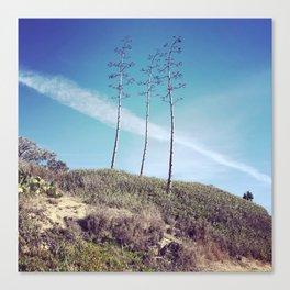 San Clemente Trees Canvas Print