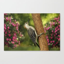 Juvenile Red Bellied Woodpecker Canvas Print