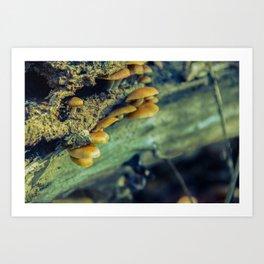 Aged Mushroom Botanical / Nature Photograph Art Print