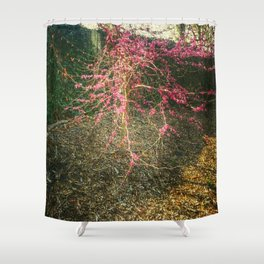 Chinese Red Bud  Shower Curtain