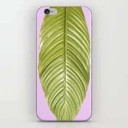 Three large green leaves on a pink background - vivid colors iPhone Skin