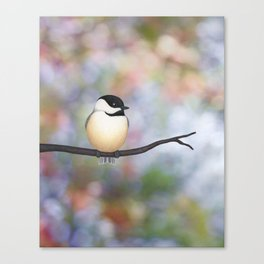 black capped chickadee on a branch Canvas Print