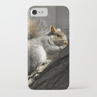 squirrel iPhone & iPod Cases featuring Squirrel by Mandy Becker