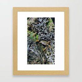 Soft Shell Crab Framed Art Print
