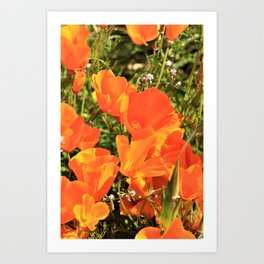 Orange Gold California Poppies by Reay of Light Art Print