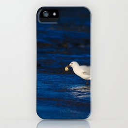 A Seagull With A Lump Of Bread At Dawn iPhone Case