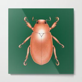 Copper Beetle on Green Background Metal Print