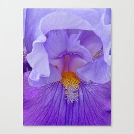 Soul of the Iris Canvas Print