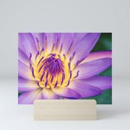 Ao Lani Heavenly Light Mini Art Print