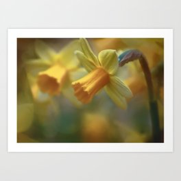 Delightful Daffs Art Print