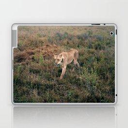 Lone Lion. Laptop & iPad Skin