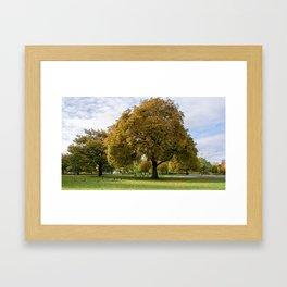 Hyde Park Framed Art Print