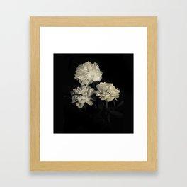 White peonies2 Framed Art Print
