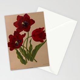 Arendsen, Arentine H. (1836-1915) - Haarlem's Flora 1872 - Garden Tulip Stationery Cards