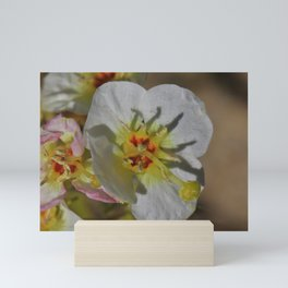 Smallest Desert Wildflower Blossoms by Reay of Light Photography Mini Art Print