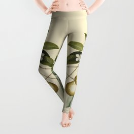 Guava Leggings