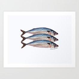 Fresh Cornish Mackerel Art Print