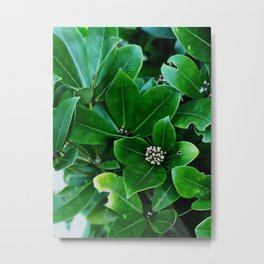 Green with White Flowers Metal Print