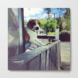 It's a Puppy Dog! Metal Print