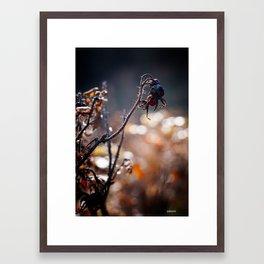 dryed0004 Framed Art Print