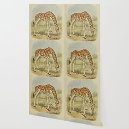 Vintage Giraffe Illustration (1903) Wallpaper
