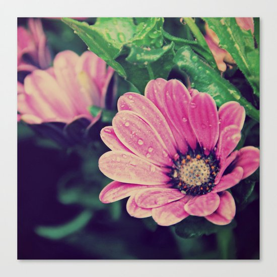 Thaw drops on flower Canvas Print