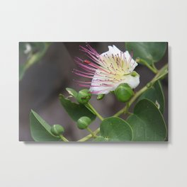 Capers Flower And Fruits Metal Print