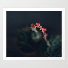 Succulent (3) Art Print