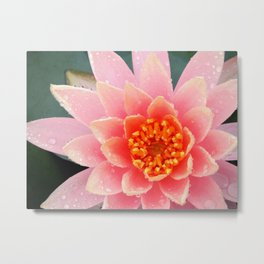 A Water Lily's Prime Metal Print