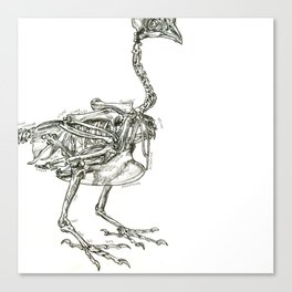Technical Drawing of a Chicken Skeleton Canvas Print
