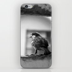a sparrow iPhone & iPod Skin
