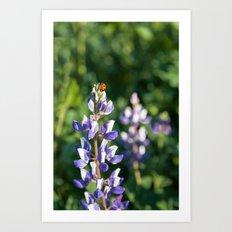Ladybug on Lupine Flower Art Print