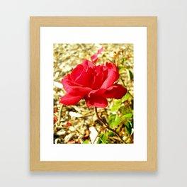 roses XV Framed Art Print