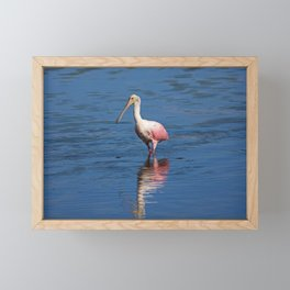 Roseate Spoonbill at Ding V Framed Mini Art Print