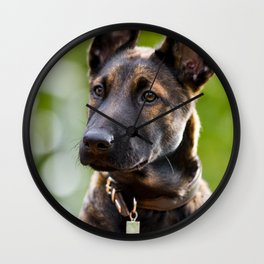 Cute Malinois - shephard puppy Wall Clock