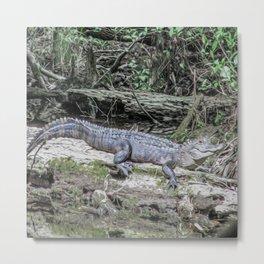 The Smiling Gator Metal Print