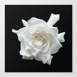Gardenia on Black DPG150524 Canvas Print